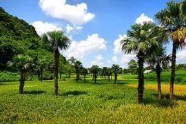 + Gửi Hàng Từ Sài Gòn Đi Tuyên Quang Giá Rẻ 0888.115.988 - Ms. HẰNG